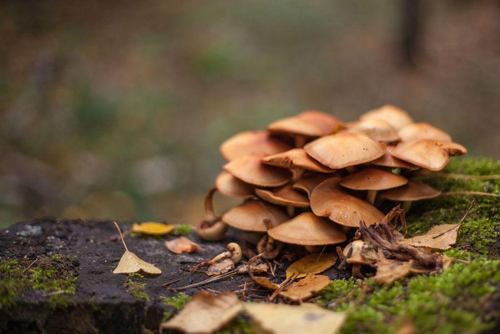Собирать грибы можно по-разному. В том числе и по нескольку раз одни и те же, если собирать их не в корзину, а в память фотоаппарата. Да и опасность, при сборе картинок куда меньше, чем если съесть несъедобный.
