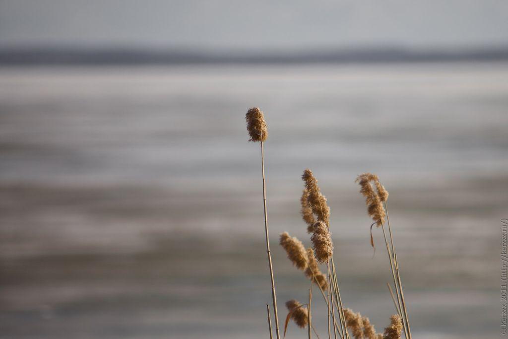 Там, на озере, ещё зима, хотя дело движется к концу апреля. А на берегу ещё встречаются отголоски осени.